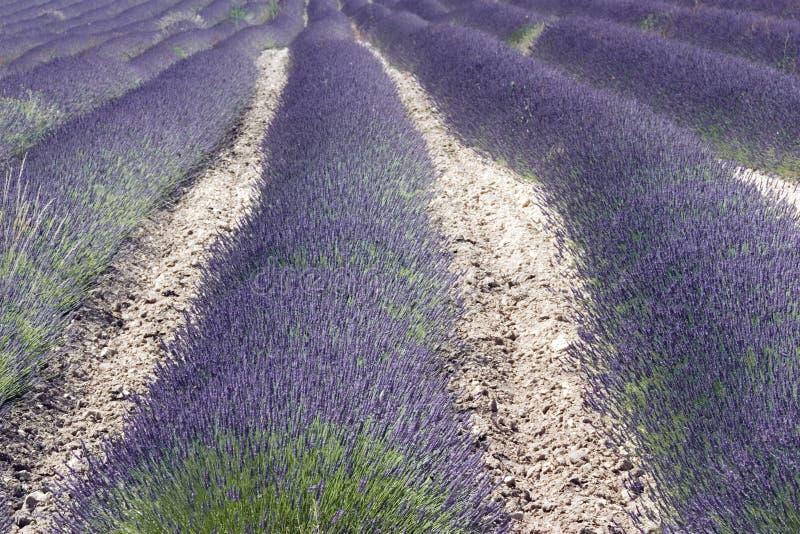 Het gebied van de lavendel in de Provence, Zuid-Frankrijk royalty-vrije stock fotografie