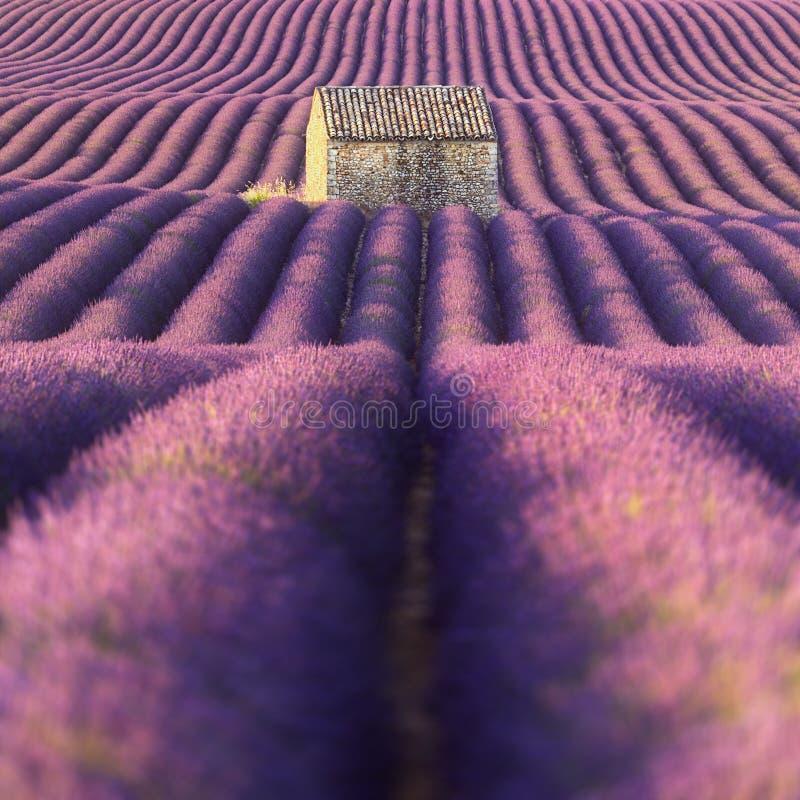 Het gebied van de lavendel in de Provence royalty-vrije stock foto's