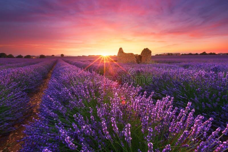 Het gebied van de lavendel in de Provence, Frankrijk royalty-vrije stock foto's