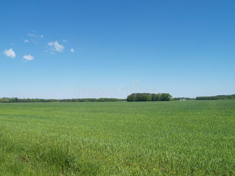 Download Het Gebied van de lente stock foto. Afbeelding bestaande uit treeline - 54078424