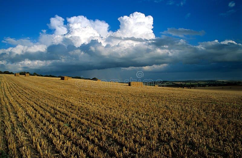 Het Gebied van de oogst stock afbeeldingen