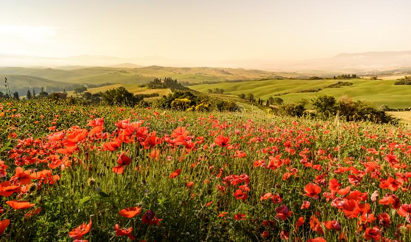 Het gebied van de papaverbloem in mooi landschapslandschap van Toscani? in Itali?, Podere-Belvedere in het Gebied van Val D Orcia royalty-vrije stock fotografie