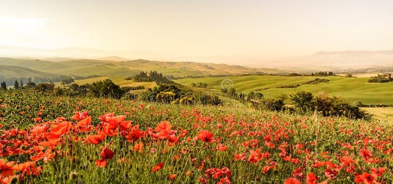 Het gebied van de papaverbloem in mooi landschapslandschap van Toscani? in Itali?, Podere-Belvedere in het Gebied van Val D Orcia royalty-vrije stock foto