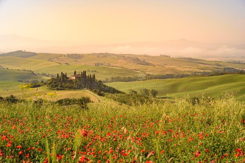 Het gebied van de papaverbloem in mooi landschapslandschap van Toscani? in Itali?, Podere-Belvedere in het Gebied van Val D Orcia stock foto