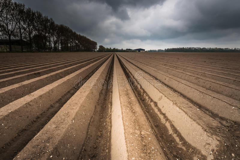 Download Het Gebied Van De Ploeglandbouw Na Het Zaaien Stock Afbeelding - Afbeelding bestaande uit vuil, farming: 54090107