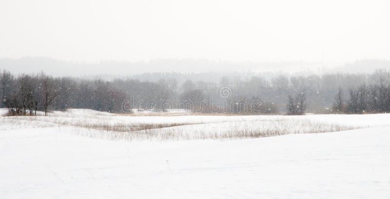 Het gebied van de sneeuw in sneeuwstorm stock afbeelding