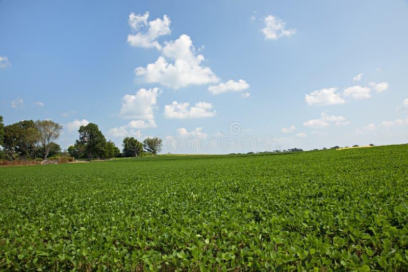 Het gebied van de sojaboon en blauwe hemel royalty-vrije stock afbeeldingen