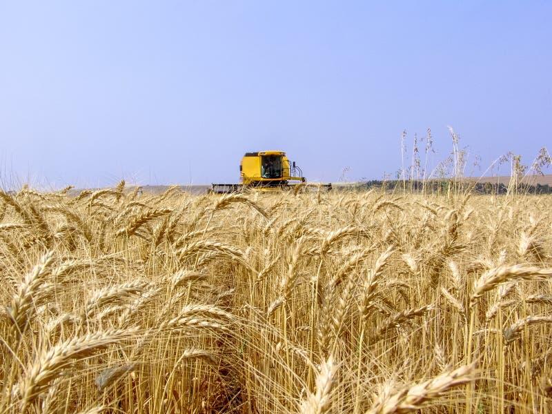 Het gebied van de tarwe stock afbeelding