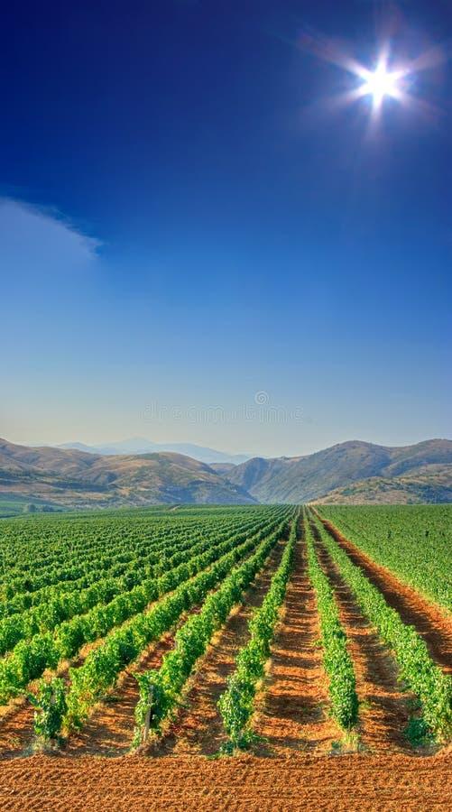 Het gebied van de wijngaard stock fotografie
