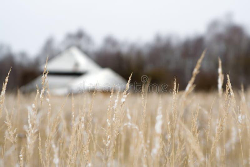 Het gebied van de winter stock foto's