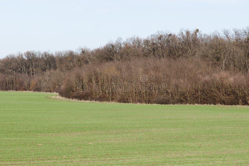 Het gebied van de de wintertarwe stock foto's