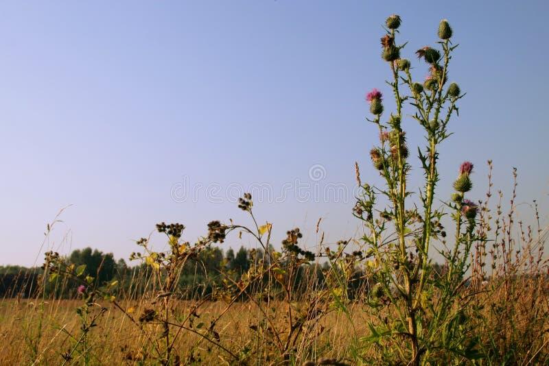 Het gebied van de zomer in dorp royalty-vrije stock afbeeldingen