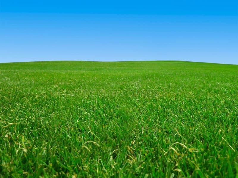 Het gebied van het gras onder blauwe hemel stock foto's