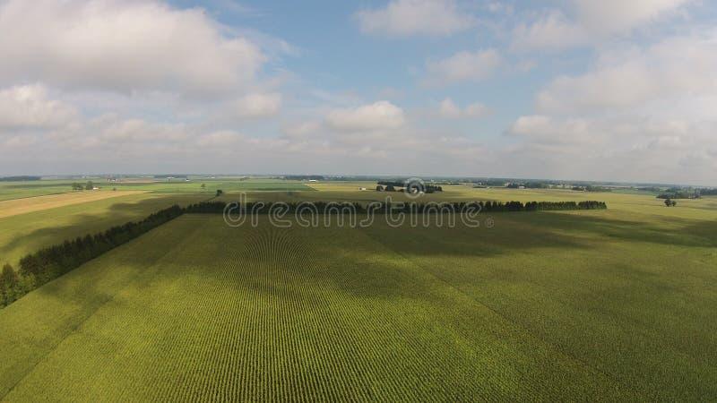 Het gebied van het graan stock afbeelding
