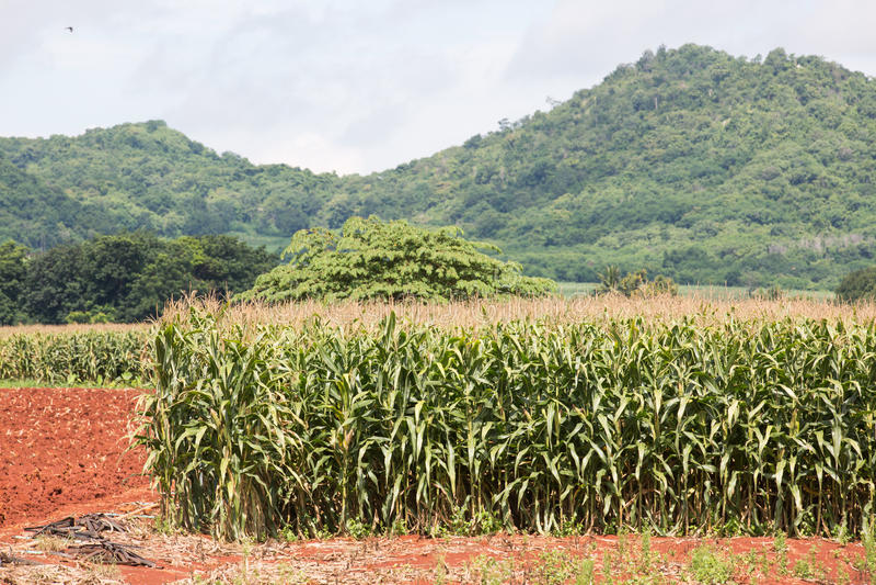 Het gebied van het graan op de berg royalty-vrije stock afbeelding