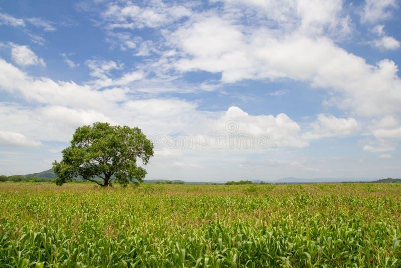 Het gebied van het graan op de berg royalty-vrije stock afbeeldingen