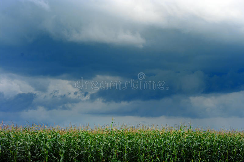 Het gebied van het graan over onweershemel stock afbeelding
