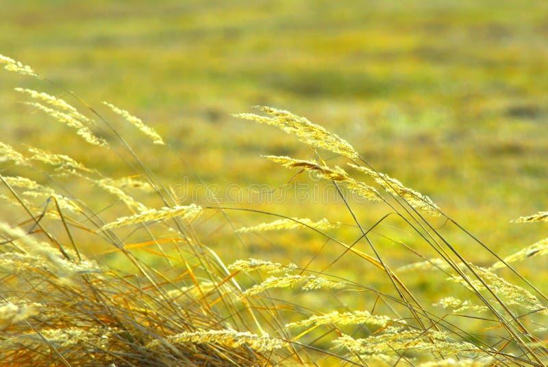 Het Gebied van het gras royalty-vrije stock foto's