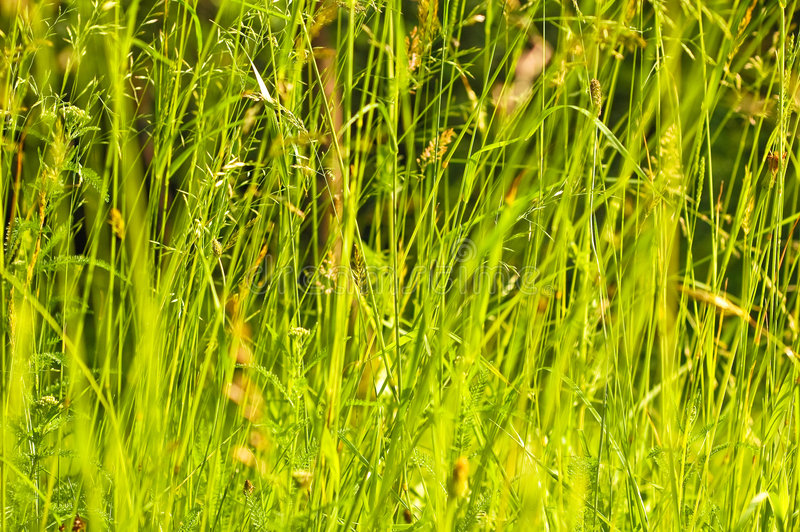 Het gebied van het gras in de de herfstzon stock foto's