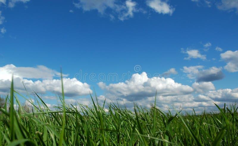 Het gebied van het gras onder blauwe hemel royalty-vrije stock fotografie