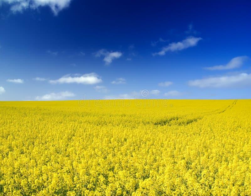 Het gebied van het landbouwbedrijf. royalty-vrije stock fotografie