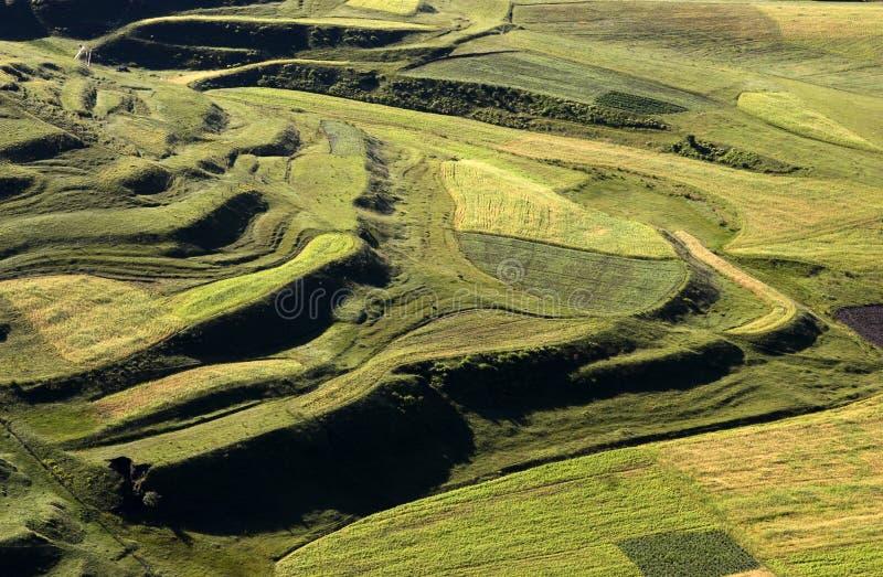 Het gebied van het landbouwbedrijf op ochtend 2 royalty-vrije stock foto