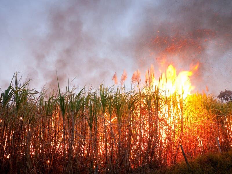 Het gebied van het suikerriet op brand stock foto
