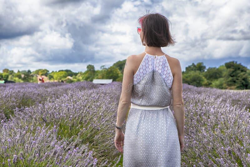 Het gebied van lavendel bij Mayfield-Lavendellandbouwbedrijf op Surrey verslaat Meisje in mooie kleding van terug naar gebied stock foto