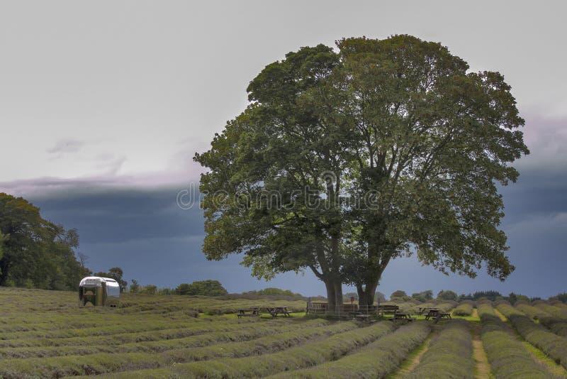 Het gebied van lavendel bij Mayfield-Lavendellandbouwbedrijf op Surrey verslaat Meisje in mooie kleding van terug naar gebied stock fotografie