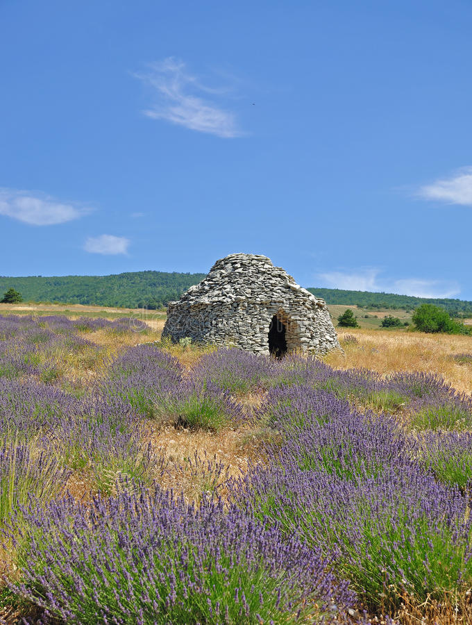 Het Gebied van Levander, de Provence stock foto