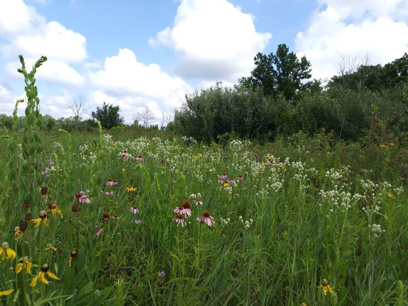 Het Gebied van Ohio Wildflower stock foto's