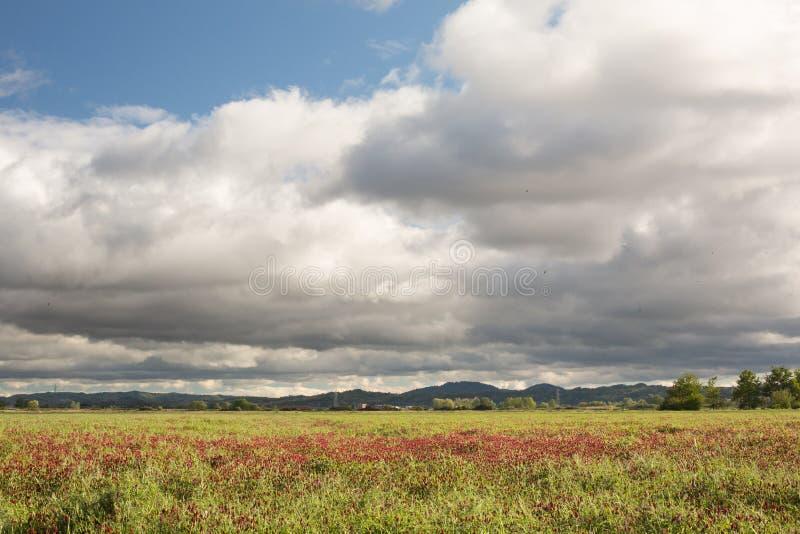 Het gebied van Padi Natuurlijke manier om rijst te kweken stock foto