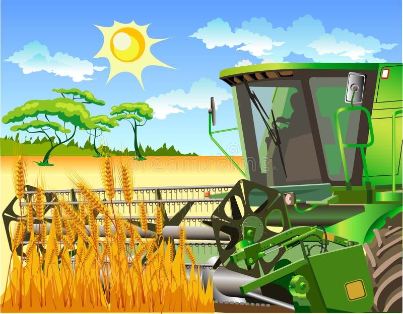 Het gebied van tarwe en combineert stock afbeeldingen