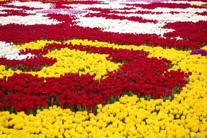 Het gebied van tulpen royalty-vrije stock foto