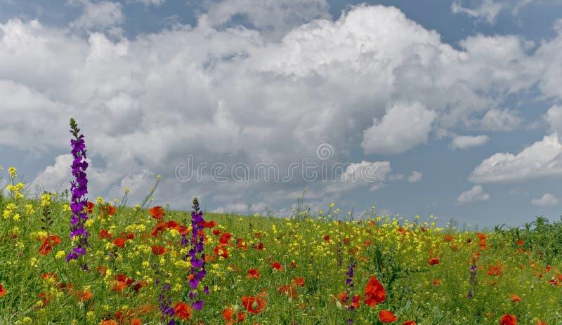 Het gebied van Wildflowers in Mei royalty-vrije stock afbeelding