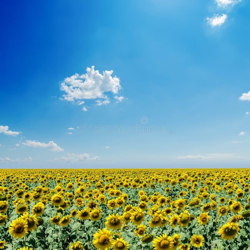 Het gebied van zonnebloemen en blauwe hemel stock foto's