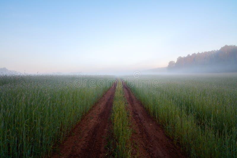 Het gebieds mistige ochtend van de landwegrogge royalty-vrije stock fotografie