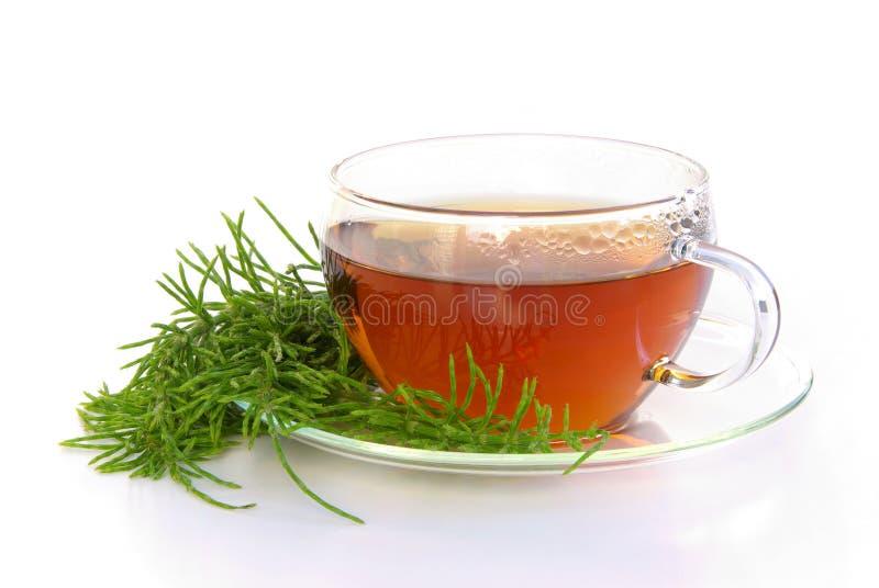 Het gebiedshorsetail van de thee stock afbeelding