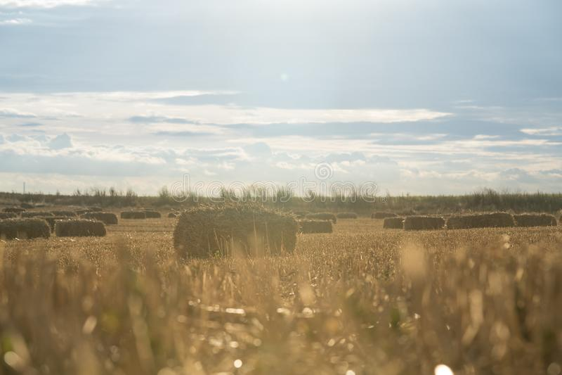 Het gebiedslandbouwbedrijf van de zonsondergang hey zomer royalty-vrije stock foto's