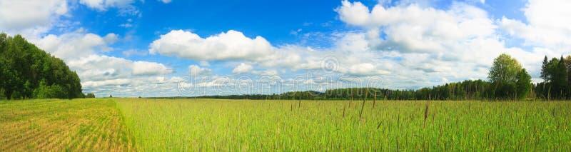 Het gebiedspanorama van de tarwe stock foto