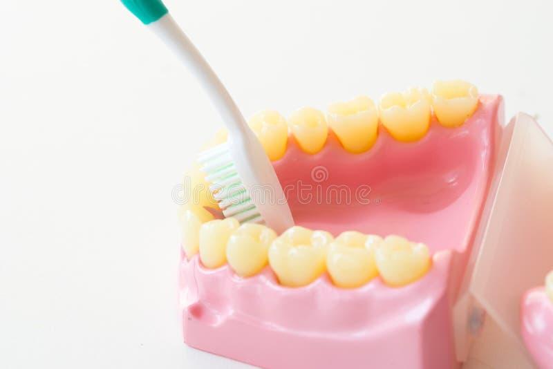 Het gebit toont hoe te om tandenborstel, tandmateriaal te gebruiken stock afbeeldingen