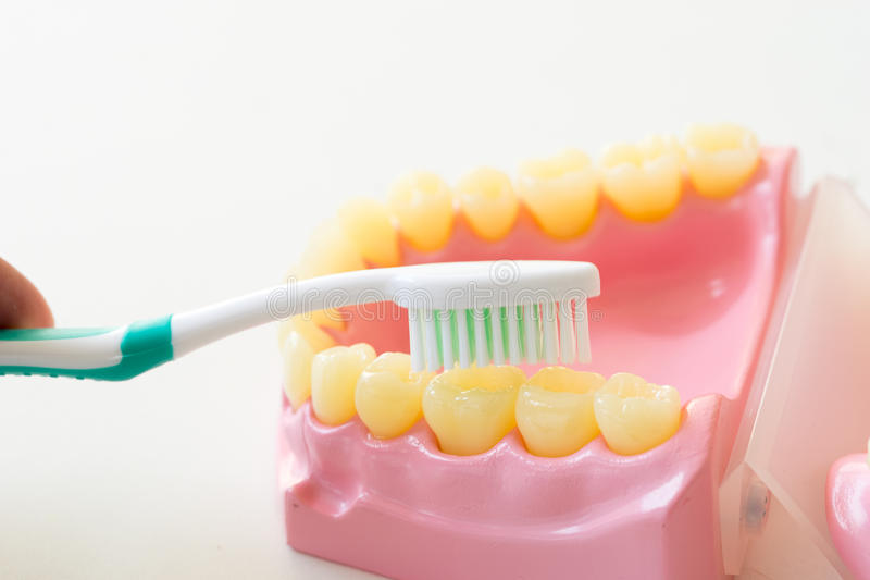Het gebit toont hoe te om tandenborstel, tandmateriaal te gebruiken royalty-vrije stock afbeelding