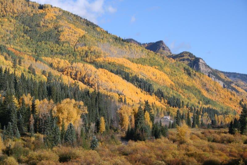 Het gebladerte van de Daling van Colorado stock foto's