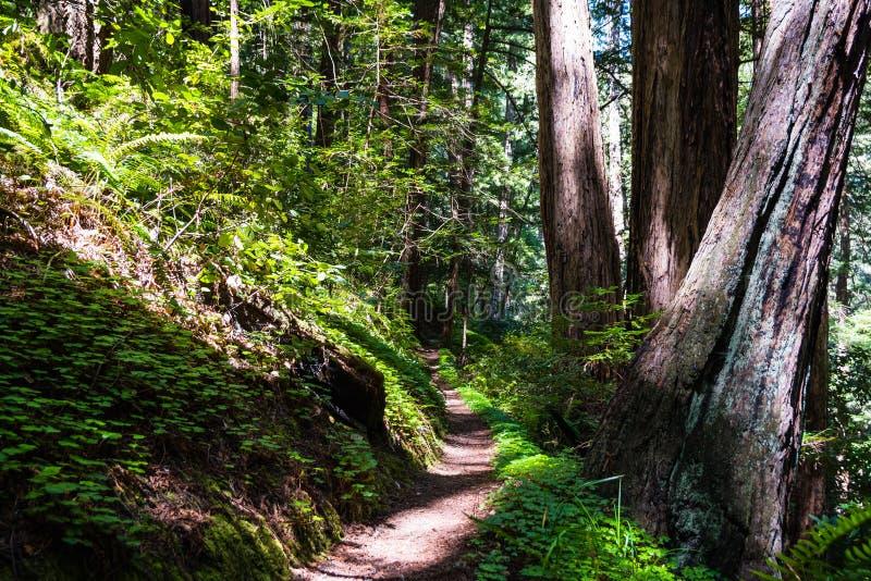 Het Gebladerte van de daling in Yosemite stock fotografie