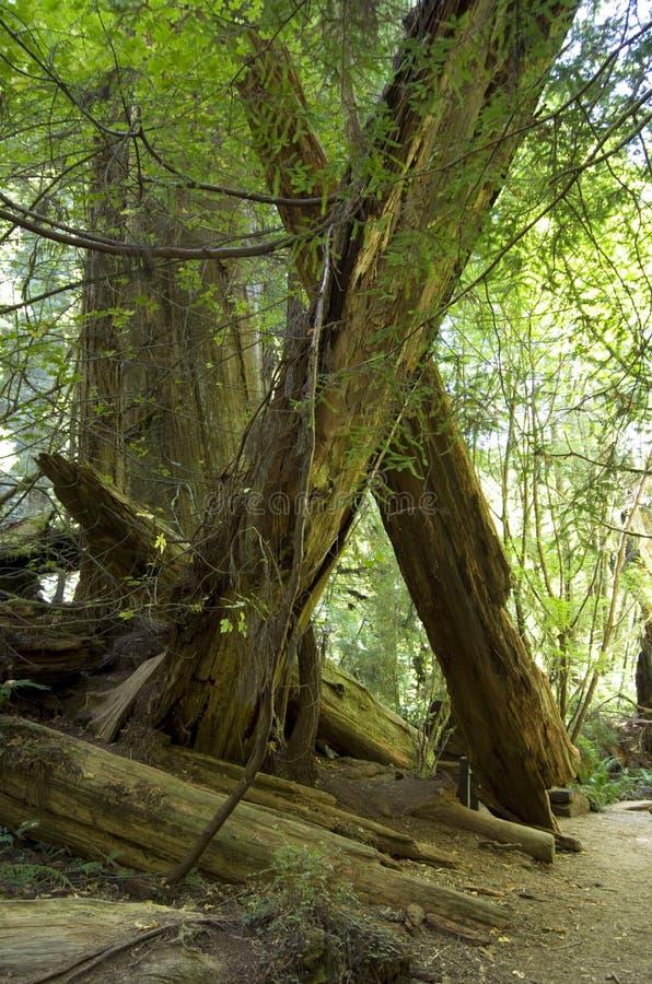 Het Gebladerte van de daling in Yosemite royalty-vrije stock foto