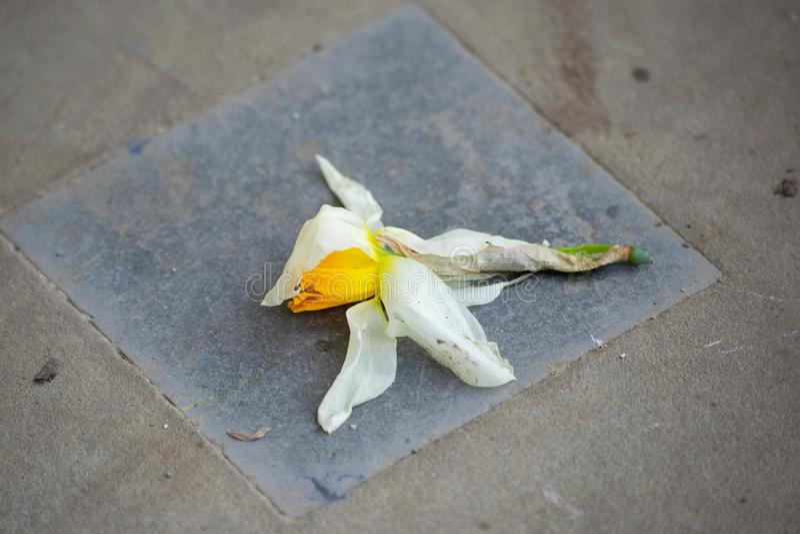 Het gebroken bloem liggen vergeten op een weg stock fotografie