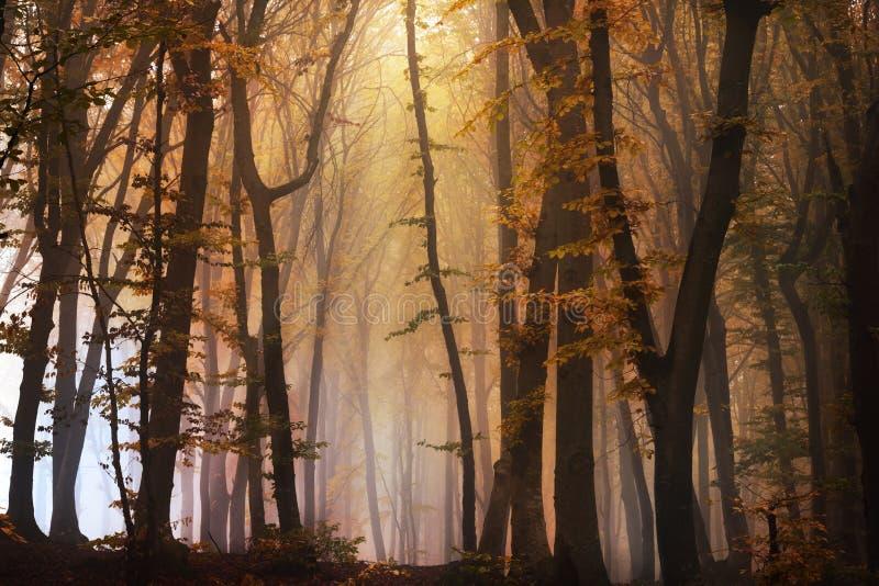Het geheimzinnige mistige bos met een fairytale ziet eruit stock foto