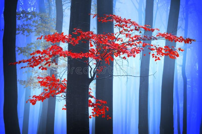 Het geheimzinnige mistige bos met een fairytale ziet eruit stock afbeeldingen