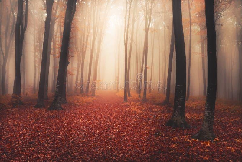 Het geheimzinnige mistige bos met een fairytale ziet eruit royalty-vrije stock afbeeldingen