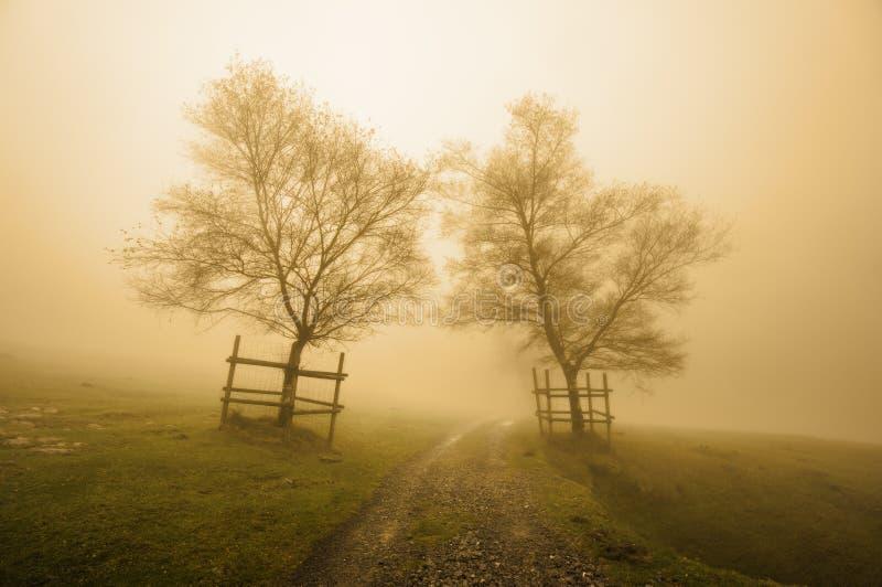 Het geheimzinnige weg omringen door bomen met sepia kleur stock foto